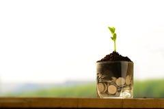 Plântula da planta no solo e nas moedas imagens de stock