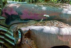Plântula em Rusty Fender foto de stock