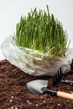 plântula no saco de plástico no solo com pá e ancinho do jardim ilustração do vetor