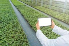 Plântulas da planta que crescem a mola da estufa biotechnology fotografia de stock royalty free
