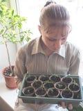 Plântulas dos tomates em uns potenciômetros da turfa Agricultura vegetal imagem de stock