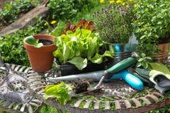 Plântulas e ferramentas de jardim foto de stock royalty free