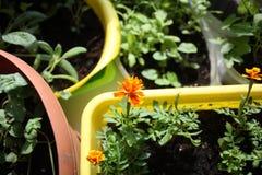 plântulas e flores em uns potenciômetros imagens de stock