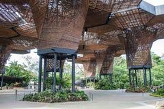 Plântulas no jardim botânico de Medelin imagens de stock royalty free