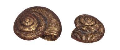 Plâtre décoratif de Shell images stock