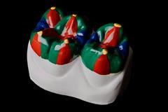 Plâtrez le modèle de deux dents molaires, peint Image libre de droits