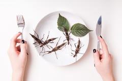 Plätera mycket av kryp i kryp för att äta restaurangen Royaltyfria Bilder