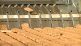 Plätzchen auf Förderer in Nahrungspflanze stock footage