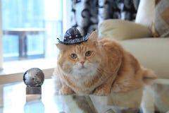 Plätzchen-Katze mit Cowboyhut Lizenzfreie Stockfotos