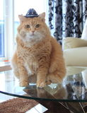 Plätzchen-Katze mit Cowboyhut Stockfoto