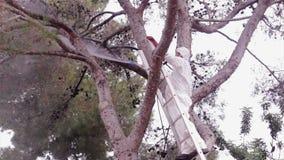 Plågakontroll som in besprutar, sörjer trädet stock video