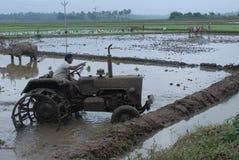 plöja av åkerbrukt land med oxar och traktoren Royaltyfri Fotografi