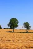 Plöjde fält i Cotswolds royaltyfria foton