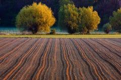 Plöjt fält i soluppgången Royaltyfri Foto