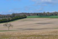 Plöjt skördfält i lantliga England Fotografering för Bildbyråer
