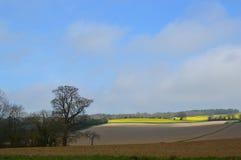 Plöjt skördfält i lantliga England arkivfoton