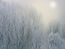 Plötslig vinter i Transnistria arkivbilder
