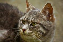 Plötzliche Geräusche weckten eine Katze auf lizenzfreie stockfotografie