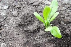 Pl?ntulas verdes plantadas na terra H? um lugar para o texto imagens de stock