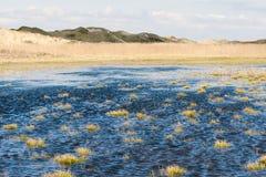 Plażowa łąka w północy - Jutland fotografia stock