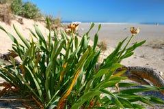 plaż roślin Zdjęcie Royalty Free