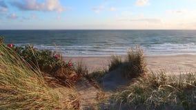 Plaża zbiory wideo