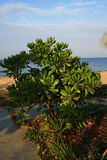 Plaża i drzewa, Phra Ae plaża, Ko Lanta, Tajlandia Obrazy Royalty Free