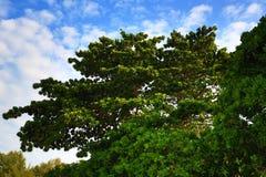 Plaża i drzewa, Phra Ae plaża, Ko Lanta, Tajlandia Obraz Royalty Free