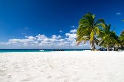 Plaża i drzewko palmowe Zdjęcie Stock