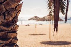 Plaża i palmy w słonecznym dniu zdjęcia royalty free