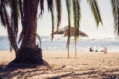 Plaża i palmy w słonecznym dniu zdjęcie royalty free