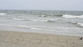 Plaża morze bałtyckie Fotografia Stock
