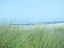 Plaża morze bałtyckie blisko Ahrenshoop z diunami i marram trawą w przedpolu Fotografia Royalty Free
