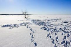Zimy plaża Zdjęcia Stock