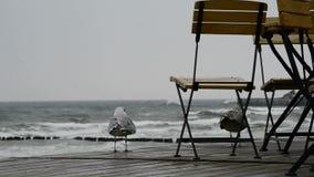 Plaża morze bałtyckie z kawiarnią Fotografia Stock