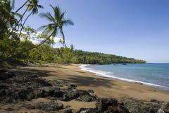 plaża nad drzewkiem palmowym Zdjęcia Stock