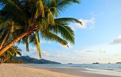 plaża nad palmą Zdjęcia Royalty Free