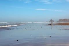 Plaża ocean człowieku Zdjęcia Royalty Free