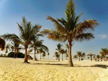 plaża, palmy, słońce, lato, wakacje Zdjęcia Royalty Free