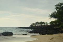 Plaża & palmy W Hawaje obraz stock