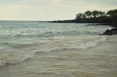 Plaża & palmy W Hawaje obrazy stock