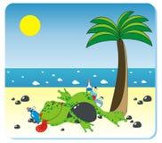 plaża pijąca żaba Zdjęcie Stock