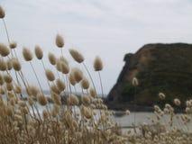 Plaża przegląda NZ Obraz Royalty Free