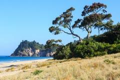 Plaża przy Whiritoa, Coromandel półwysep, Nowa Zelandia zdjęcia royalty free