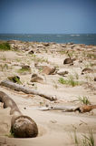 plaża spadać drzewka palmowe Zdjęcia Stock