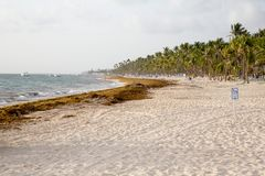 Plaża w republice dominikańskiej obrazy royalty free