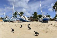 Plaża z łodziami, Pititinga (Brazylia) obraz royalty free