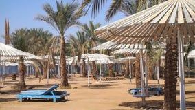 Plaża z drzewkami palmowymi i bujny zielonym bungalowem zbiory wideo