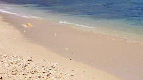Plaża z fala zbiory wideo
