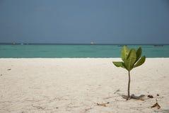 Plaża z małym drzewem i morzem Obraz Royalty Free
